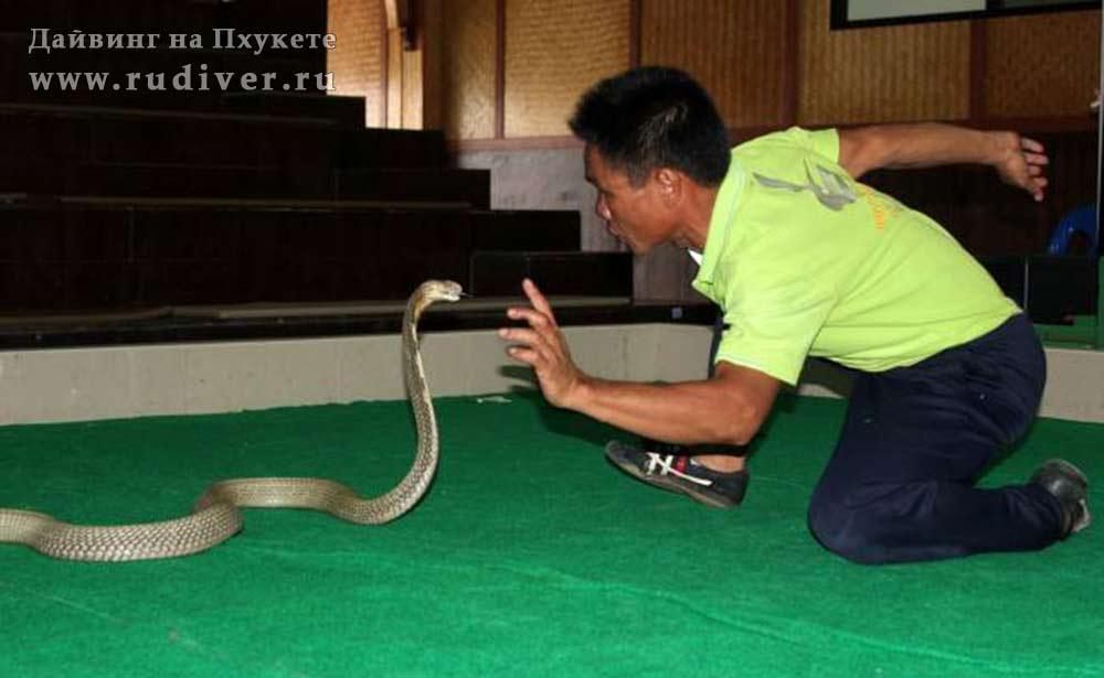 Змеиная ферма на Пхукете, Тайланд