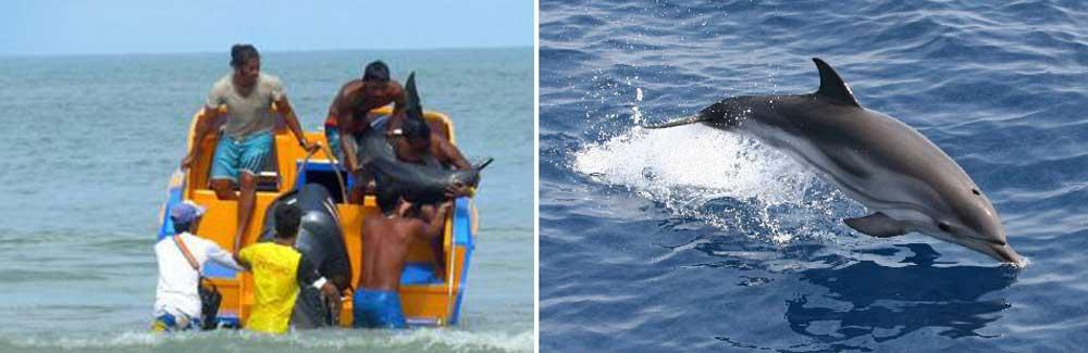 дельфины на пхукете