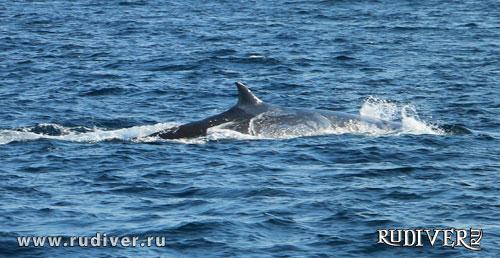 дайвинг пхукет киты